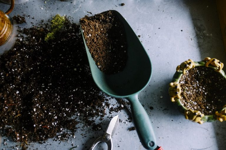 Comment entretenir son jardin  avec soin ?